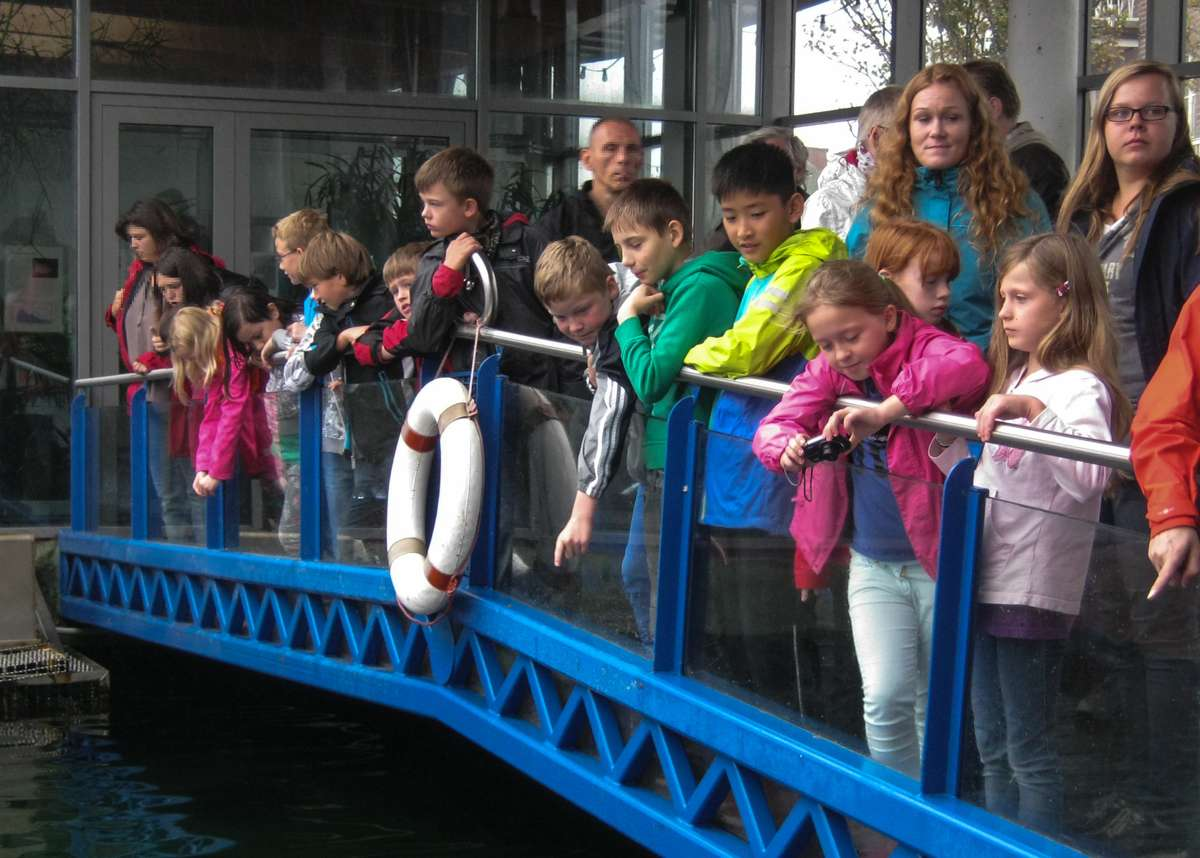 Zuschauer Seehundsfütterung