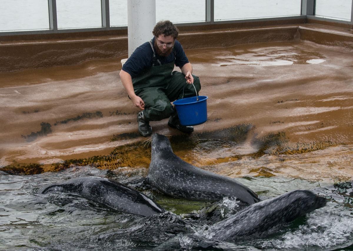 Seehundsfütterung- Paul, Ole und Pit werden gefüttert.