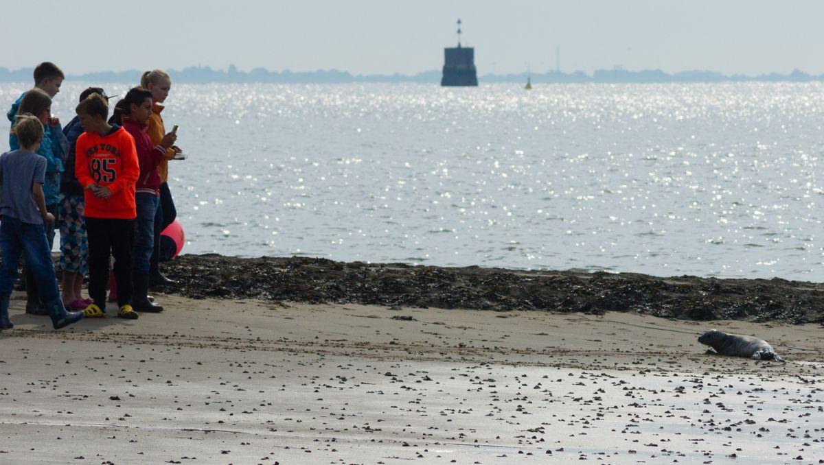 Die Kinder entdecken einen Seehund am Strand, der auf sie zurobbt.