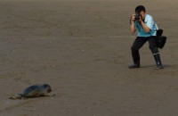Der Seehund ließ sich geduldig fotografieren.