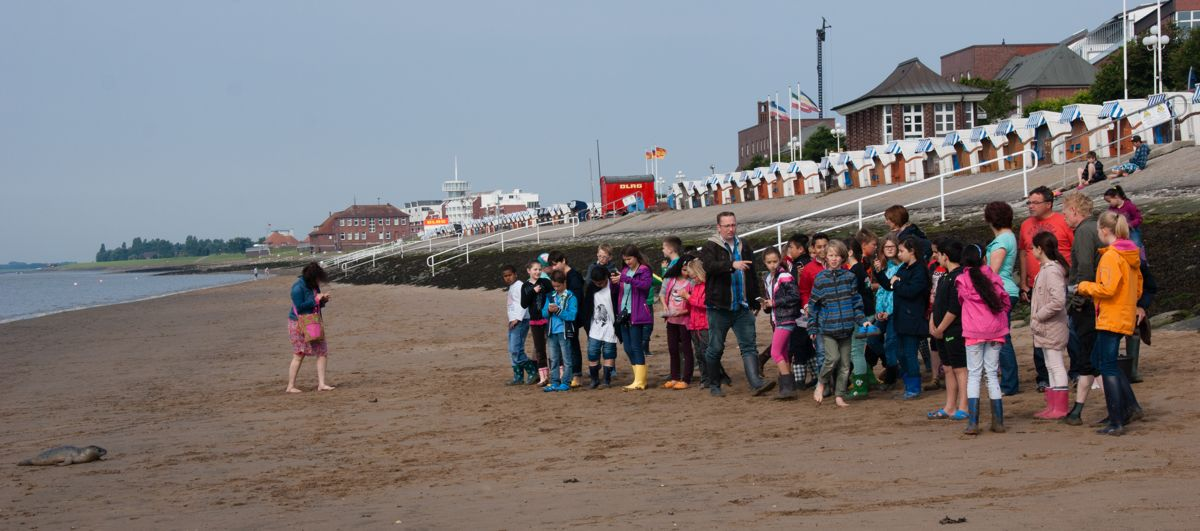Kinder beobachen Seehund am Strand