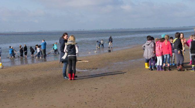 Wattenmeerprojekt 16/17 erfolgreich gestartet